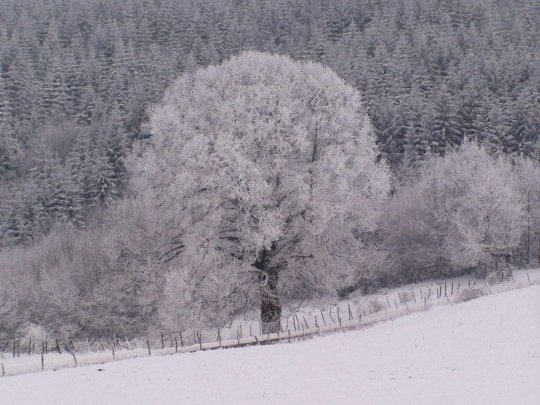 arbrehiversouclinainlagnieu.jpg
