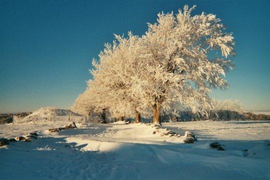 neigearbrecampagnelaguioleaveyron.jpg